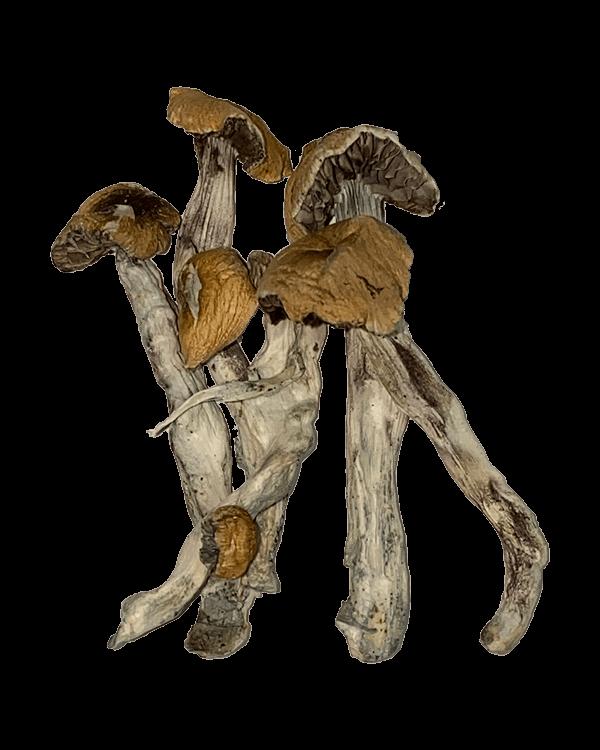 Koi Sumoi Mushrooms
