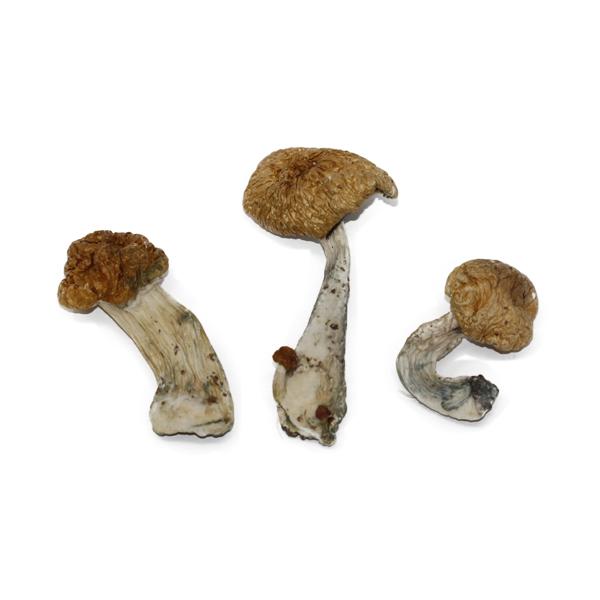 Hawaiian Mushroom